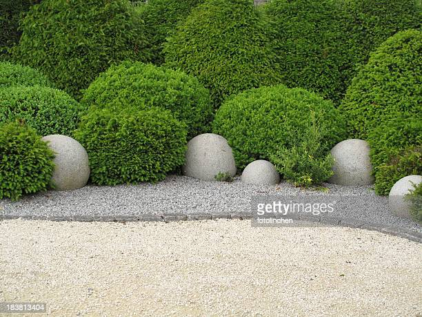 Garden with shrubs on a soil of stone