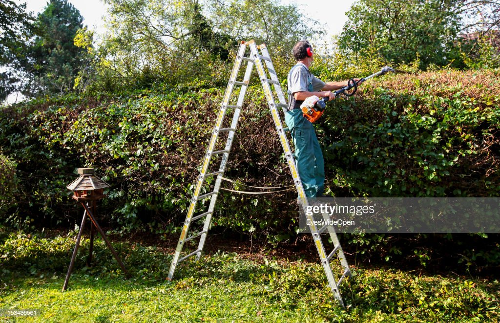 A gardener, a man with protective clothing and equipment, is cutting a hedge with a motorsaw and doing garden work while standing on a ladder on August 29, 2012 in Grafing, Bavaria, Germany.