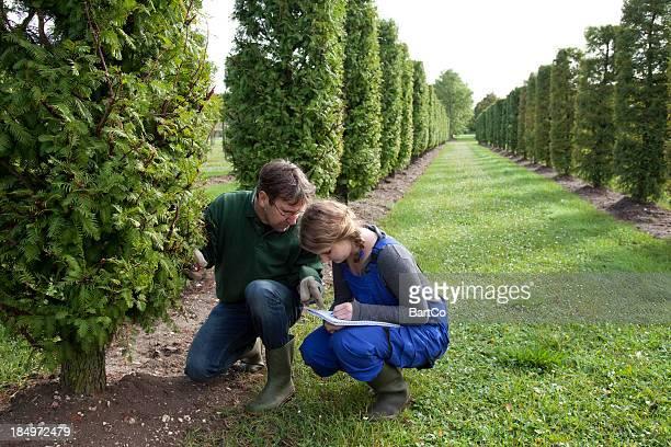 Gardener and apprentice