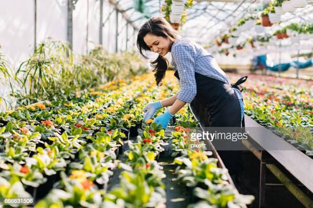 Gardener arranging flower pots