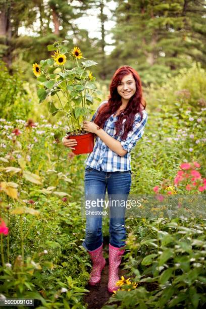 Gardener carrying sunflower plant in field