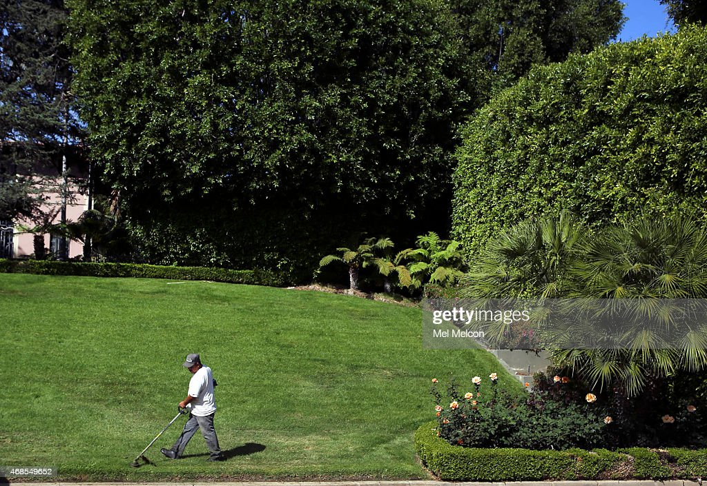 A gardener cuts the lawn at a home on Greenway Dr near Sunset Blvd in Beverly Hills on April 3 2015 Governor Jerry Brown issued an executive order...