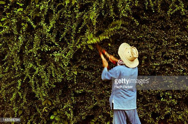 Gardener cutting tree