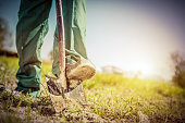 Gardener digging in a garden with a shovel. Preparing soil for new plants. Retro style