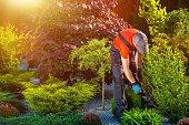 Gardener Garden Works. Caucasian Gardener at Work. Beautiful Summer Day in the Garden