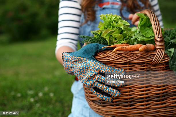 Gardener holding a basket full of fresh vegetables