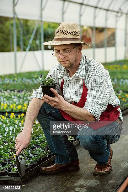 Gardener in flower nursery looking at baby flowers