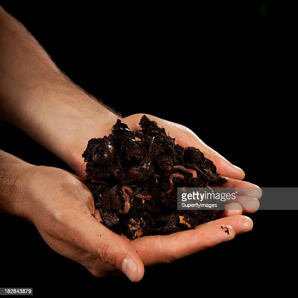 Gardener Man Holds Rich Compost With Worms in Cupped Palms