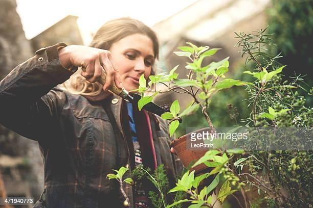 Gardener take care of the plants