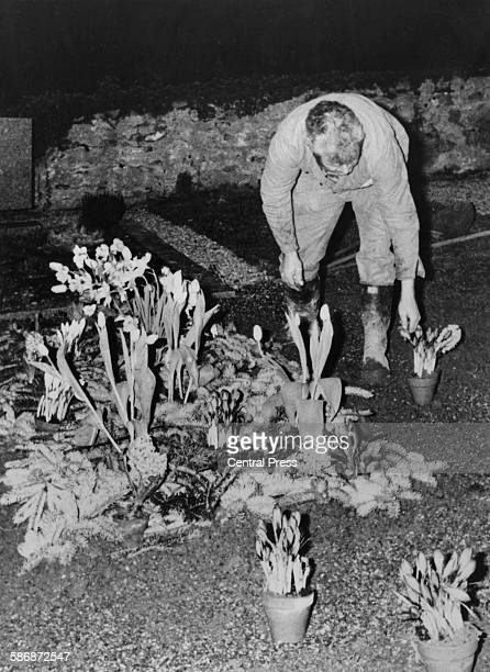 A gardener tidies the desecrated grave of English film actor and director Charlie Chaplin in the cemetery at CorsiersurVevey Switzerland 6th March...