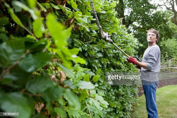 Gärtner Schneiden Beech Hedge