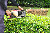 Gardener trimming green bush with trimmer machine