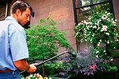 Gardener watering bushes