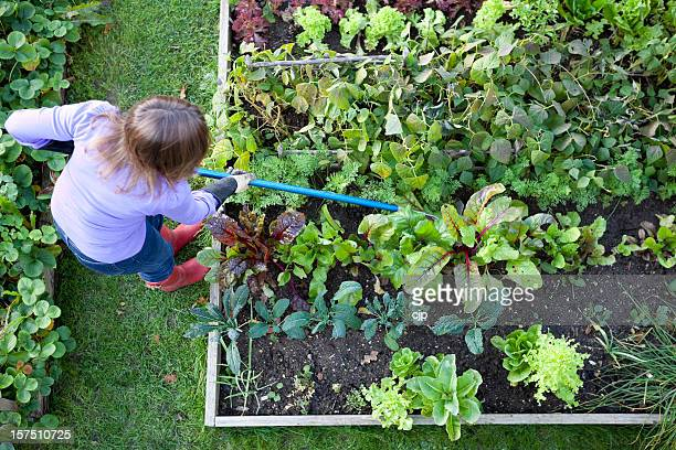 Gardener Weeding Vegetable Patch