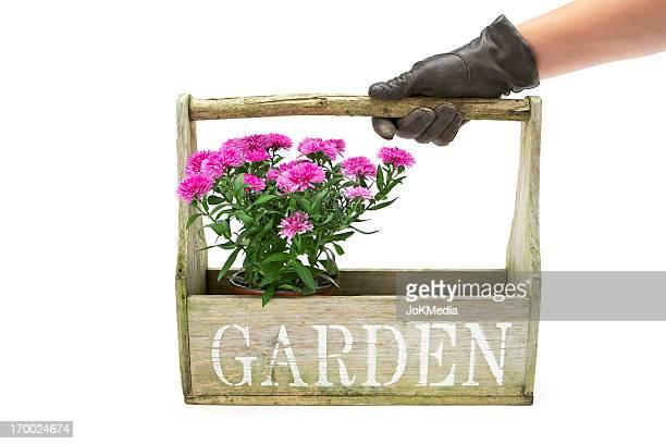 ガーデナー、鉢植えの花