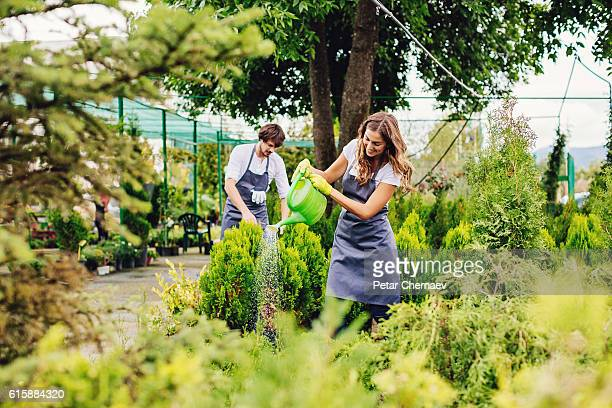Gardeners working with decorative landscape plants