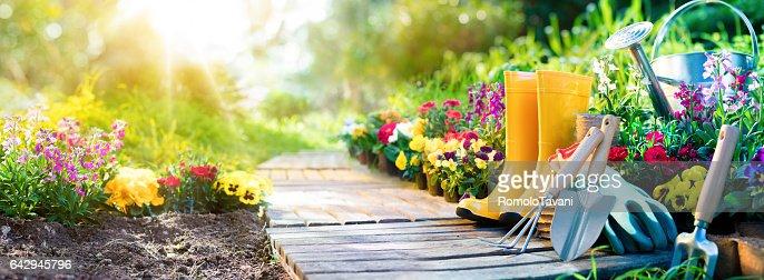 Gardening - Equipment Flowerbed In Sunny Garden : Foto stock
