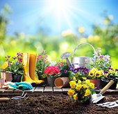 Set Of Tools For Gardener And Flowerpots In Sunny Garden