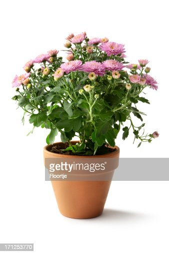 Ver fotos de jardineria 6