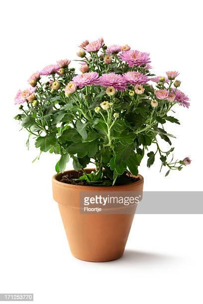 ガーデニング: の花