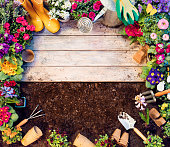 Gardening preparation -Tools And Plants In Frame