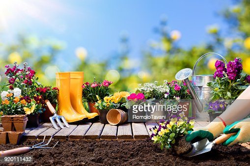 Gardening - Gardener Planting Pansy With With Flowerpots And Tools : Stock Photo