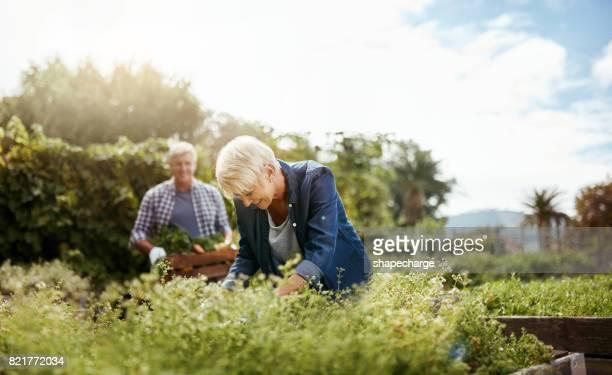Gartenarbeit bietet Ihnen eine neue Wertschätzung für die Natur