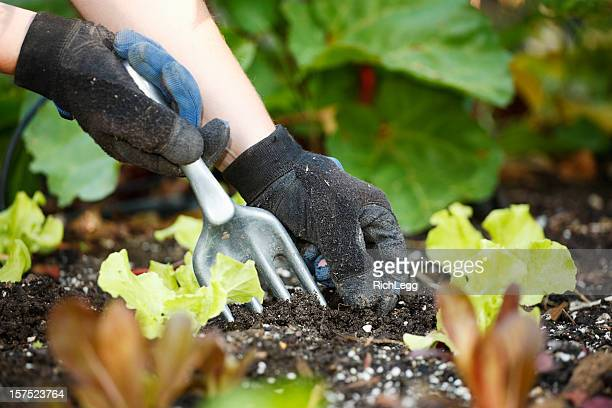 Jardinage les mains