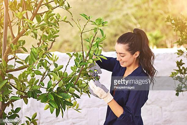 Gärtnern ist billiger als Therapie