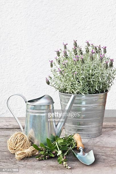 Gardening Time!