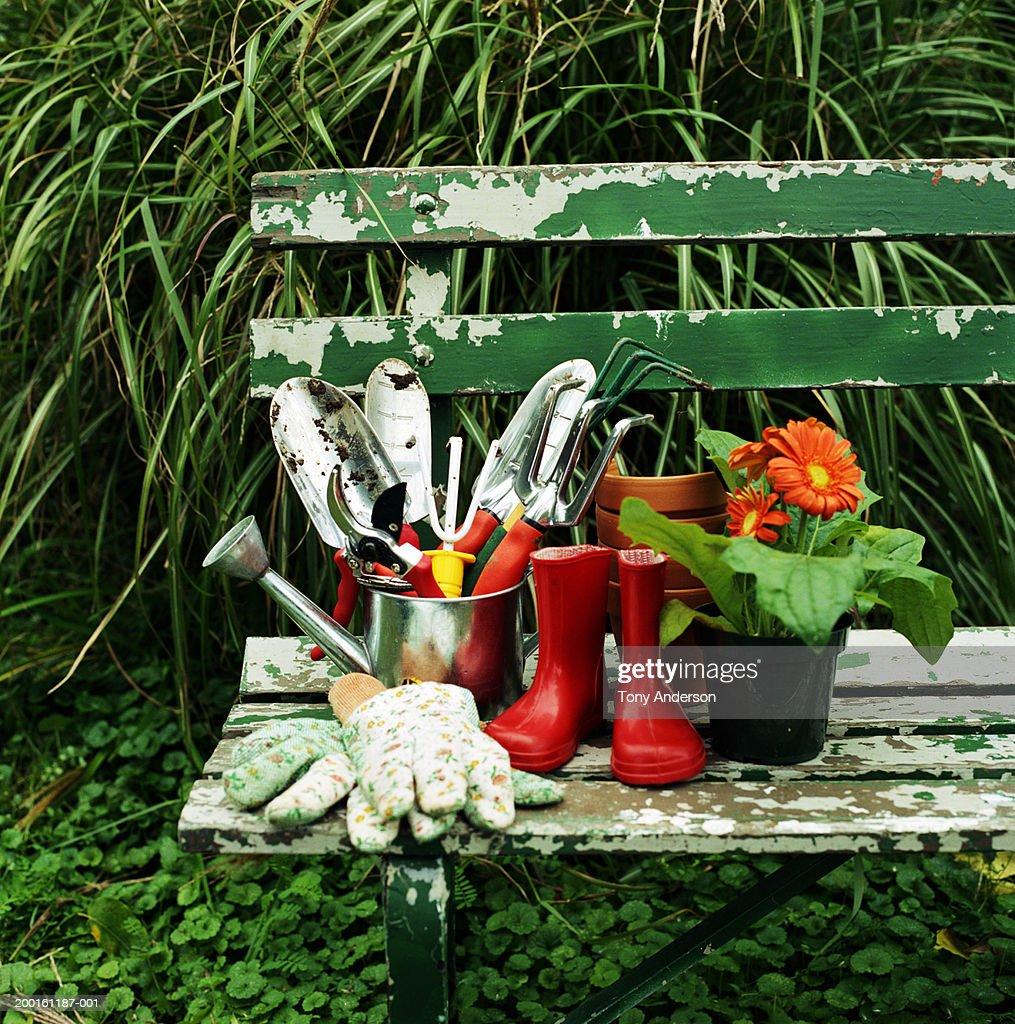 Gardening tools and Gerber daisy (Gerbera jamesonii) on bench : Stock Photo