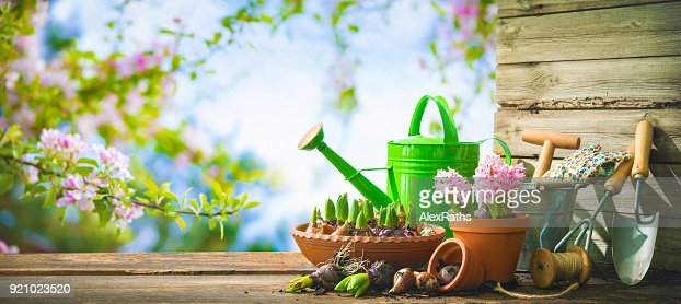 Gardening tools and spring flowers on the terrace : Stock Photo