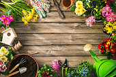 Gardening tools and spring flowers on wooden table