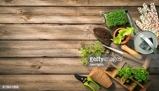 Gardening tools, seeds and soil on wooden table : Stock Photo