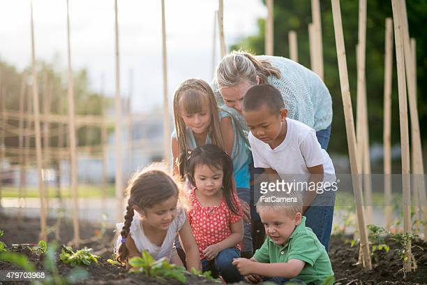 Jardinagem com os seus amigos e familiares