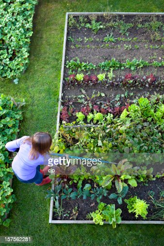 Gardening Woman Weeding Vegetable Garden