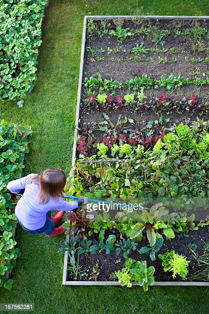 Gardening Woman Weeding Vegetable Garden