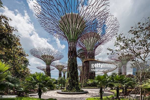 Gardens by the Bay, view of Supertree Grove