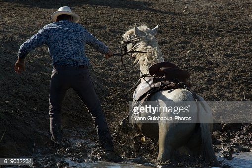 Gardian the cowboy of Camargue and white horse in the mud, Camargue, France