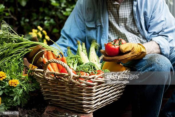 Gardner Holding Tomato and Basket of Vegetables