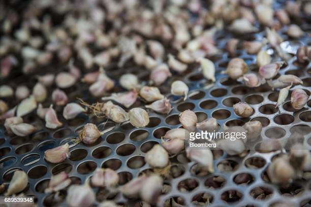 Garlic cloves are processed at the Nithi Foods Co factory in the San Pa Tong district of Chiang Mai Thailand on Tuesday May 23 2017 Thailand's...
