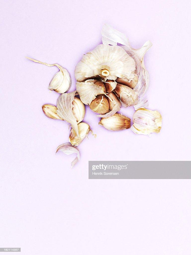 Garlic head : Stock Photo