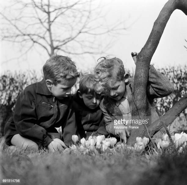 Garçons regardant les fleurs dans un jardin en France en 1952