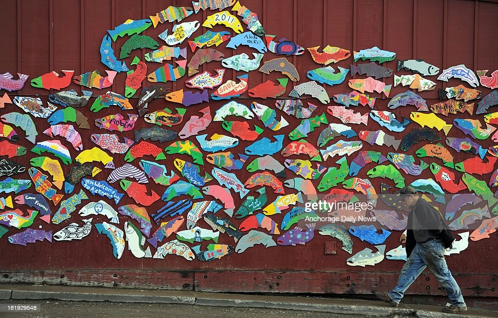 Gary Baker, a commercial fisherman for 30 years on the Naknek side of Bristol Bay, walks past a salmon mural on a store in Dillingham, Alaska, on Monday, August 26, 2013. Baker is concerned if something goes wrong with the Pebble Mine. The Pebble Mine could be the largest open pit mine on the continent, with an earthen tailings dam higher than the Washington Monument to hold mine waste for hundreds to thousands of years, according to an Environmental Protection Agency analysis.