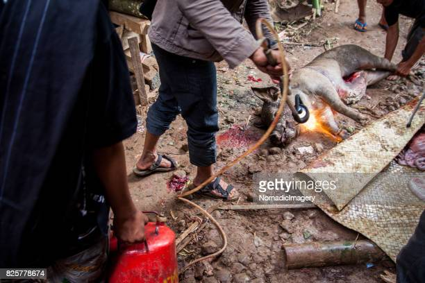 Gas cylinder and blow torch scorching a pig animal sacrifice