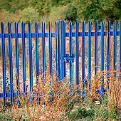 Gate in overgrown land