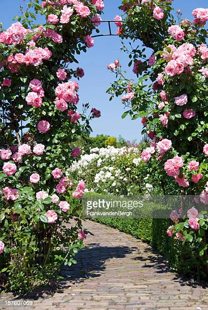 Gate of Pink Roses