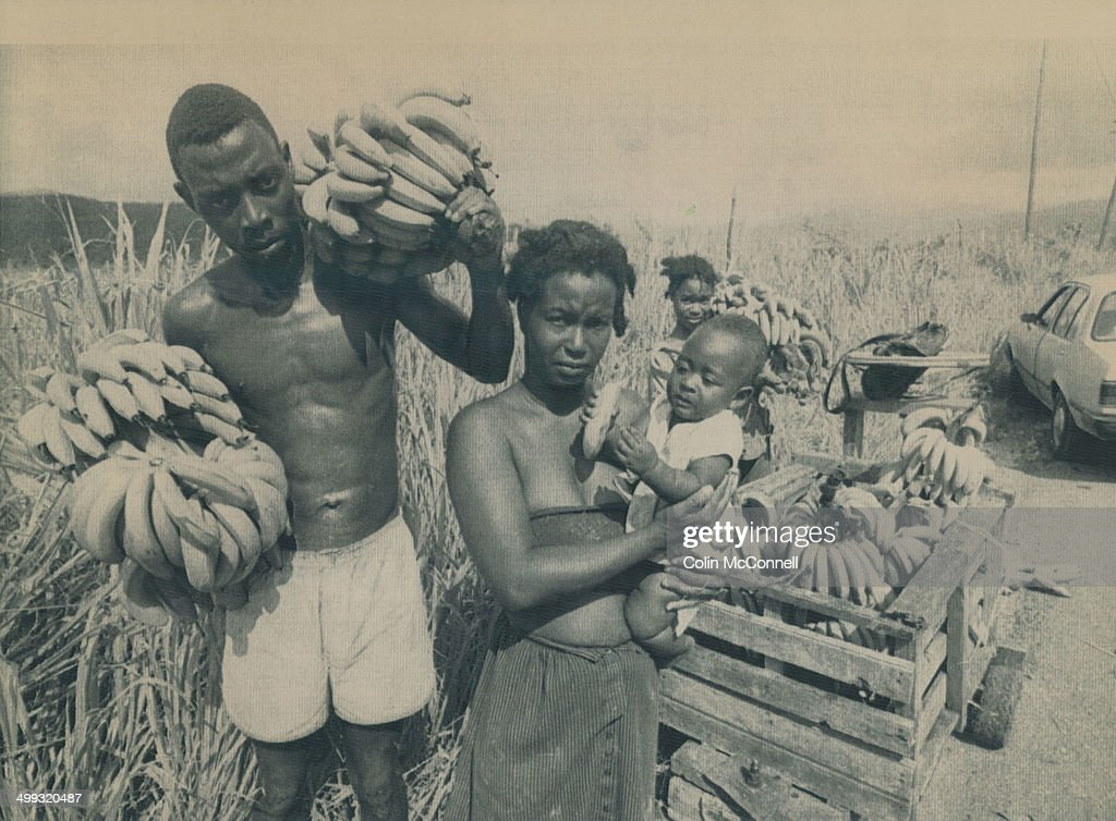 Gathering food Donovan Thomas his wife Marcia Deans and their children Rosealet 11 and Marvin 7 months gather bananas from the fields ravaged by...