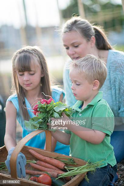 Pregueado jardim produtos hortícolas