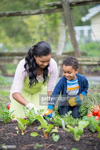 Recolha de produtos hortícolas no jardim